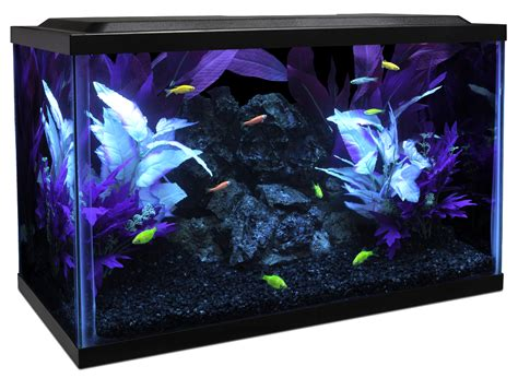 glofish 174 care
