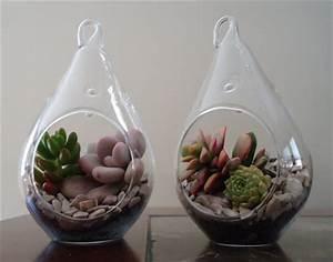 2 Pack Succulent Terrariums  Plants