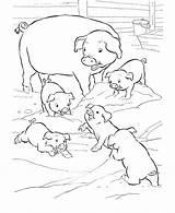 Coloring Pig Pigs Three Printable sketch template