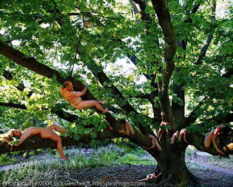 english oak treespirit project