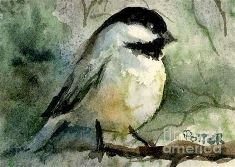 chickadee aceo watercolor  images watercolour