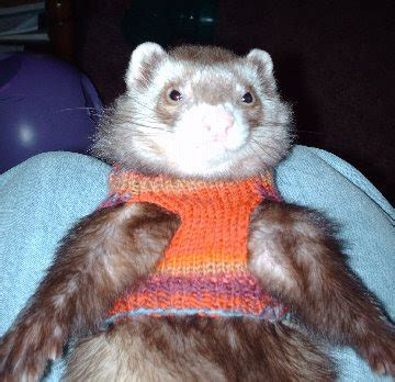 ferret sweaters ferret sweaters 24 images 17 best images about