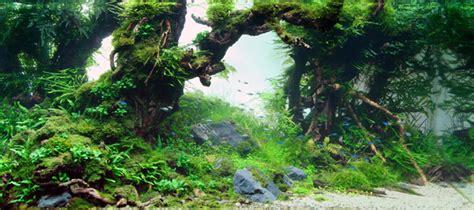 Takashi Amano Aquascape by Takashi Amano Photographer And Aquarist