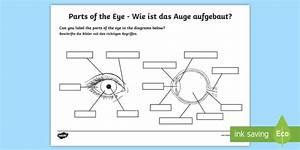 The Human Eye Labelling Activity English  German