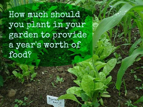 how much should you plant in your garden to provide a