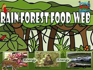 114 Best Images About Food Chains  U0026 Food Webs On Pinterest