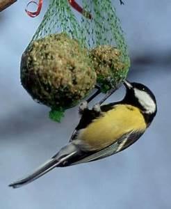 Que Donner A Manger A Un Ecureuil Sauvage : les aliments bon ou mauvais pour nos oiseaux sauvages ~ Dallasstarsshop.com Idées de Décoration