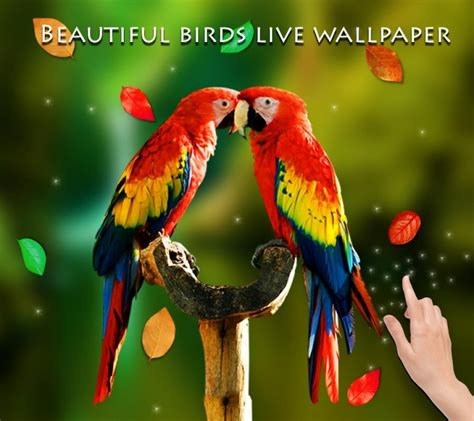 3d Live Wallpaper Animals - birds 3d live wallpaper apk for android aptoide