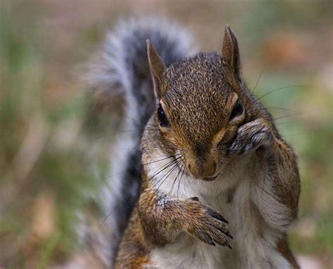 Gabbia Di Scoiattolo Animali Della Foresta Di Latifoglie Foto Nanopress Viaggi