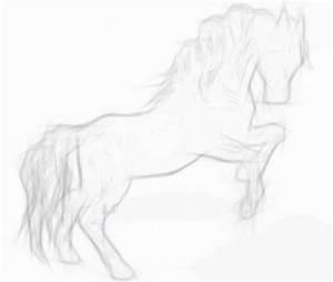 Pencil Drawings – Horses - Dream Driven Art