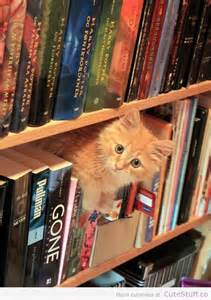 dewey the library cat pin by hansen on dewey readmore books