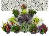 Balkonpflanzen Herbst Winter : grabbepflanzung herbst winter pflanzen versand harro 39 s pflanzenwelt kaufen bestellen online ~ Sanjose-hotels-ca.com Haus und Dekorationen