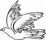 Pigeon Taube Ausmalbilder Colorare Disegni Fliegende Che Gratis Coloriage Zum Disegno Vola Ausmalbild Animaux Kolorowanki Ausmalen Gołąb Uccellino Ptaki Piccione sketch template