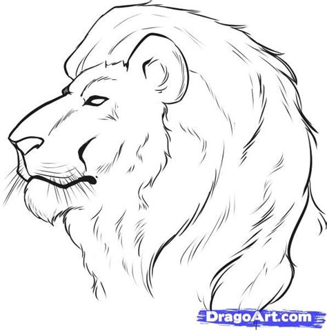 drawing faces   draw  lion face step  step