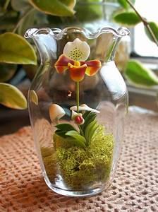 Make an orchid terrarium in 5 minutes - small garden ideas