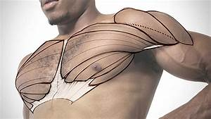 Tip  The Best Chest Exercise You U0026 39 Ve Never Tried