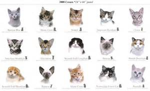 cats breeds cat breeds breeds of cats cats cat breeds