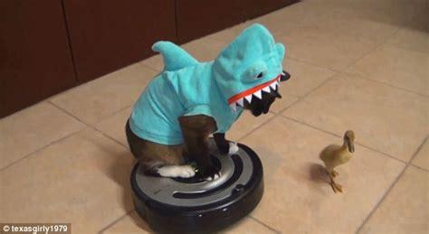 Shark Week Costume Wearing Catshark On Robotic Vacuum