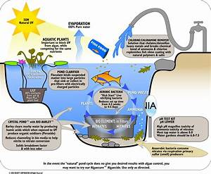 Water Filtration Diagram For Kids