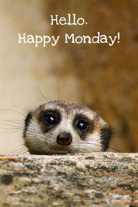 happy monday pictures   images