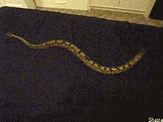 Snake pussy insertion gifs