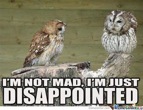 Funny Owl Meme - best 25 funny owl pictures ideas on pinterest funny owls pics of owls and owls