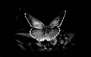 Black and white nature butterfly insects 1920x1200 ...