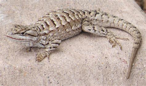 Backyard Reptiles by R1