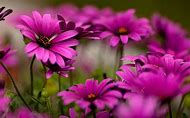Beautiful Bright Colored Flowers