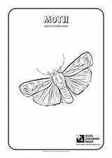 Moth Coloring Pages Cool Insects Butterfly Mm Wingspan Animals Different Fly sketch template