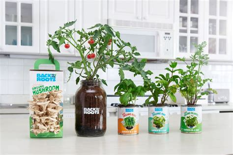 Window Seal Pots by The Complete Windowsill Garden Kit