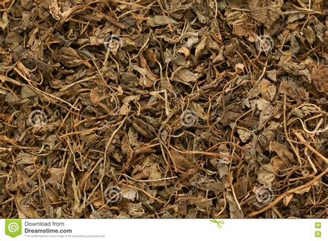 Dried Fenugreek Leaves Royalty Free Stock Photography