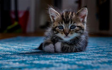 bureau pour bebe tlcharger fond d 39 ecran chaton bébé voir fonds d 39 ecran