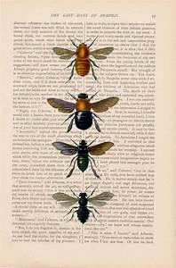 45 best Honey Bees images on Pinterest | Bees, Honey bees ...