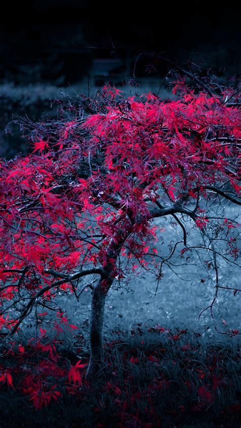Beautiful Tree Phone Wallpaper by 50 Iphone 6 Autumn Wallpaper On Wallpapersafari