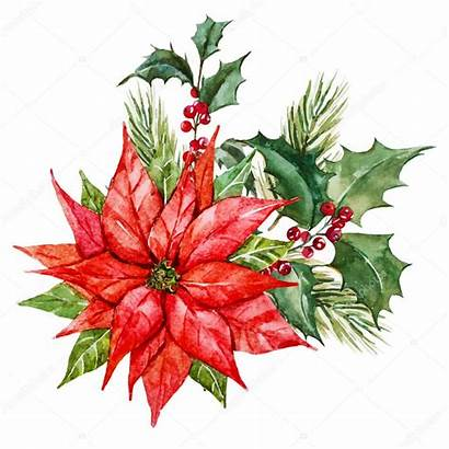 Watercolor Christmas Flowers Poinsettia Holly Illustration Vector