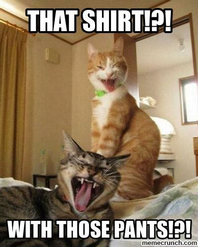 Laughing Cat Meme Laughing Cats