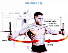 Pec Deck Flyes Target Muscles by Chest Exercises For Beginners Fitness321go
