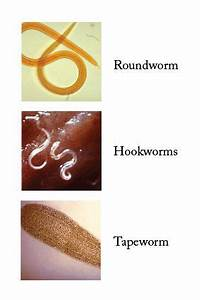 Human Tapeworm Symptoms Larvae | ... Zoonotic Disease ...