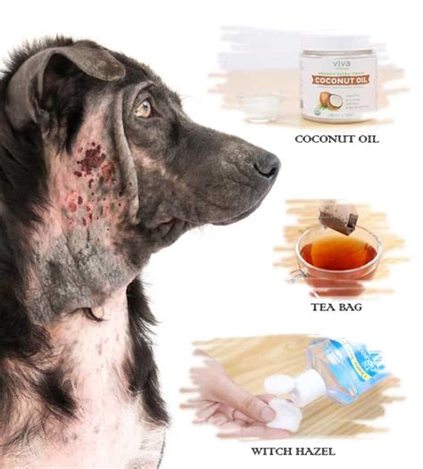 home remedies  hot spots  dogs  vet