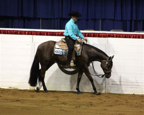 congress horse quarter american thoroughbreds essay western pleasure racing barrel saddle hunter under invited compete