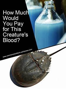 That's Bloody Expensive! – Commonplace Fun Facts