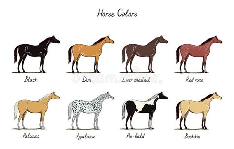 Horse Color Chart Set. Equine Coat Colors With Text. Types Breville Coffee Machine Qatar Drinking Thermos Maker Uses Too Many Beans Backpack Star Wars Nfl Portable Farmers