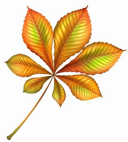 Clipart Autumn Fall Leaf Orange Clip Thanksgiving