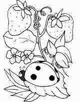 Coloring Ladybug Bug Strawberry Colouring Tree Sheet Lady Printable Sheets Adult Insect Ladybugs Cartoon Animal Clipart Library Coloringhome Suggestion Clip sketch template