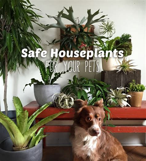 low light indoor plants safe for cats house plants low light cat safe decoratingspecial com