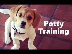 how to potty train a peagle puppy peagle house training With potty train your dog fast