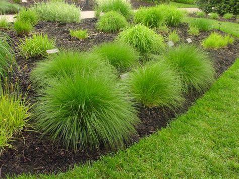 Types Of Ornamental Grasses Diy
