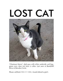 lost cat tips 7 tips for finding your lost cat iheartcats all