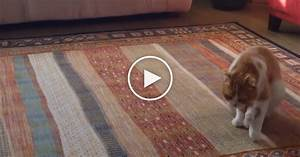 Funny Cat Has A New Way Of Moving Around The House  It U2019s